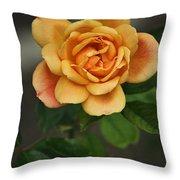 Yellow Rose Of Baden Throw Pillow