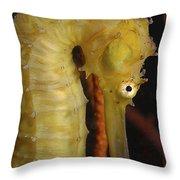 Yellow Seahorse, Batam, Riau, Indonesia Throw Pillow