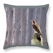 Yellow-shafted Flicker Posing Throw Pillow