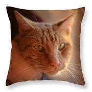 Yellow Tabby Throw Pillow