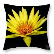 Yellow Water Lily Throw Pillow by Nick Zelinsky