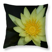 Yellow Waterlily - Nymphaea Mexicana - Hawaii Throw Pillow