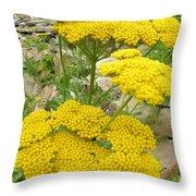 Yellow Yarrow Throw Pillow
