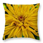 Yellow Zinnia_9480_4272 Throw Pillow