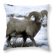 Yellowstone Big Horn Sheep Throw Pillow