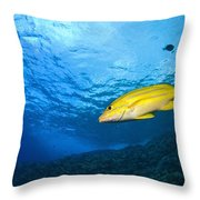 Yellowtail Snapper, Molokini Crater Throw Pillow