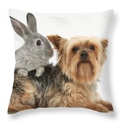 Yorkshire Terrier And Young Silver Throw Pillow