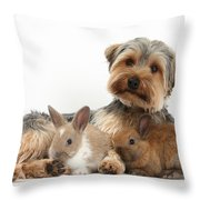 Yorkshire Terrier Dog And Baby Rabbits Throw Pillow