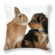 Yorkshire Terrier Pup With Rabbit Throw Pillow