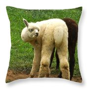 You Can't Sneak Up On Alpacas Throw Pillow