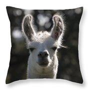 You Talkin To Me ? Throw Pillow by Kelly Rader