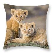 Young African Lion Cubs  Throw Pillow