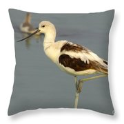 Young American Avocet Throw Pillow