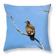 Young Bald Eagle Throw Pillow