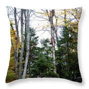 Young Buck In Autumn Throw Pillow