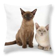 Young Burmese Cats Throw Pillow