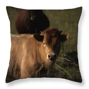Young Calf Throw Pillow