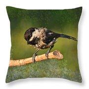 Young Chickadee Throw Pillow
