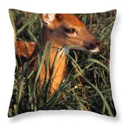 Young Deer Laying In Grass Throw Pillow