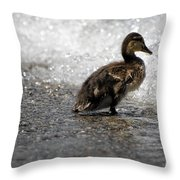 Young Duck On The Beach Throw Pillow