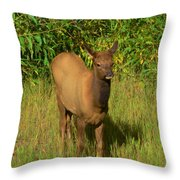 Young Elk Throw Pillow