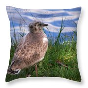 Young Gull Throw Pillow