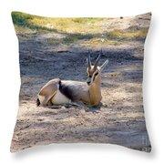 Young Ibex Throw Pillow