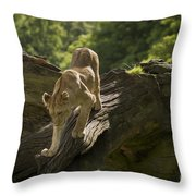 Young Lion Stalking Throw Pillow