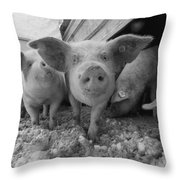 Young Pigs In A Snowy Pen. Property Throw Pillow