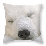 Young Polar Bear With Snow Dusted Throw Pillow