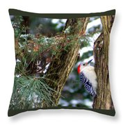 Young Red-bellied Woodpecker Throw Pillow