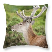 Young Red Deer Throw Pillow