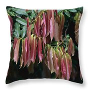 Young Red Leaves Lacking Chlorophyll Throw Pillow