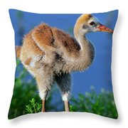 Young Sandhill Crane Throw Pillow