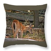 Young Whitetail Throw Pillow