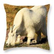Yummmmmmmy Throw Pillow