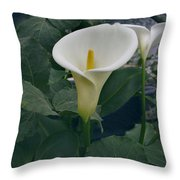 Zantedeshia Aethiopica African Flower Throw Pillow