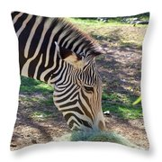 Zebra At Lunch Throw Pillow