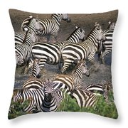 Zebra At Waterhole Throw Pillow
