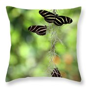 Zebra Butterflies Hanging Out Throw Pillow