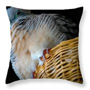 Zebra Dove From Above Throw Pillow