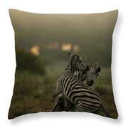 Zebra Equus Burchelli Throw Pillow