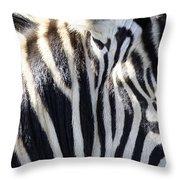Zebra Face  Throw Pillow