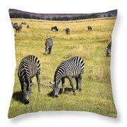 Zebra Grub Throw Pillow