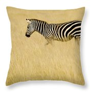 Zebra In Grasses Throw Pillow