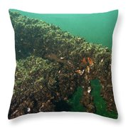 Zebra Mussels Throw Pillow