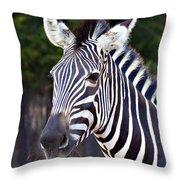 Zebra Symmetry  Throw Pillow