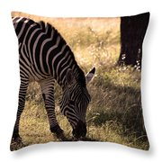 Zebra Take One Throw Pillow