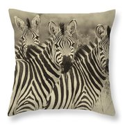 Zebra Trio Throw Pillow