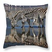 Zebras Drinking Ngorongoro Crater Tanzania Throw Pillow